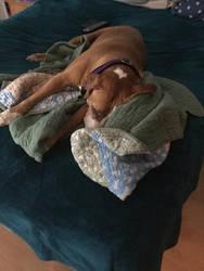 Sleepy doggo by StoneHot316