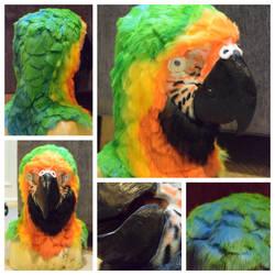 Macaw | Head by Yamishizen