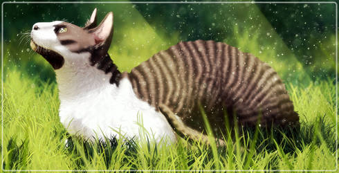 Kiwi by DarkMasterOfDragons