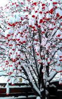 Snowy Roan Tree by Meagpie2497
