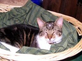 Cat Nap by sonamy4life