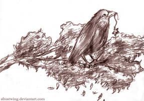 crow by SFrostWing