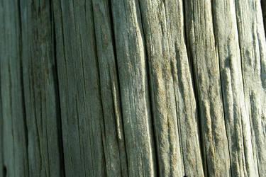 Wood Texture by multimediamogul