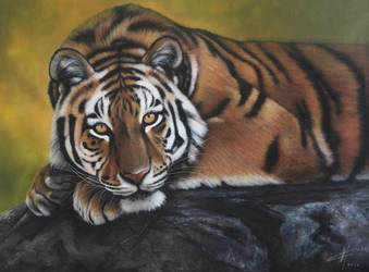 Tigre 2  by miualpainter