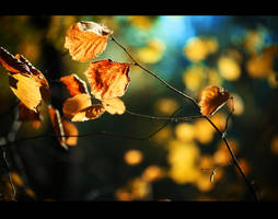 Autumn has come 7 by Dmitriyphoto