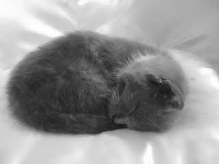 Booboo-kitty-cat's Profile Picture