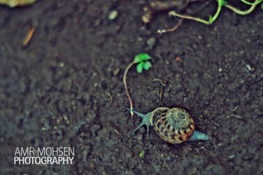 snail on the road by Amr-Mohsen