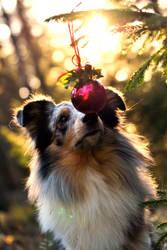 Merle Christmas II by KattFloka