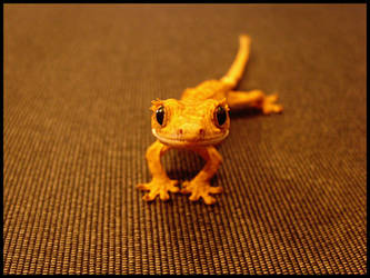 Crested gecko by dzimi