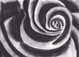 Black and white charcoal rose by Thevastcanvas