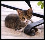 Kitten by Wohmatak