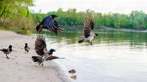 Crows by andreyntu