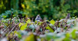 Sparrow by andreyntu