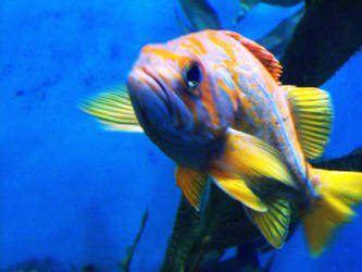 A Fish by azkardchic