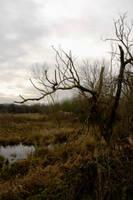 Attenborough nature reserve 2 by dannykaye