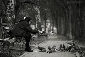 Feeding the birds by adypetrisor