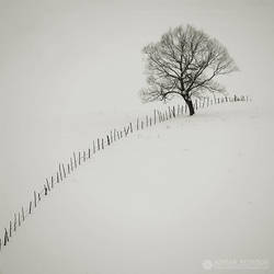 fences 5 by adypetrisor