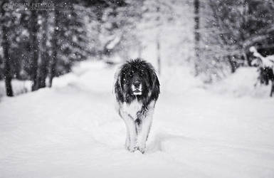 King of snow by adypetrisor