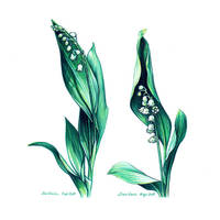 Lily of the valley by dasidaria-art