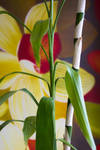 Bamboo Style by GavinAsh