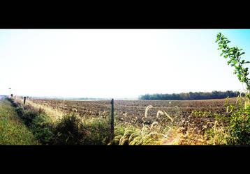 Bright Field by KitXune