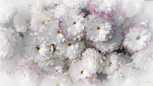Imagen de flores by ValeVelez-222