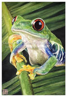 Red-Eyed Tree Frog by CamillaMalcus