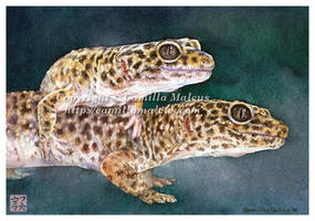 Leopard Geckos by CamillaMalcus
