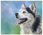 Siberian Husky by CamillaMalcus