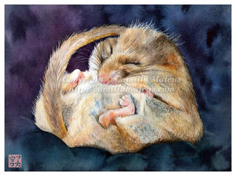 Dormouse by CamillaMalcus