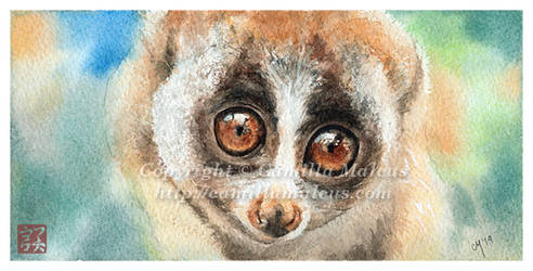 Slow Loris by CamillaMalcus