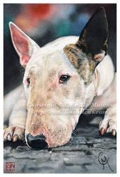 Bull Terrier by CamillaMalcus