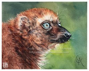 Sclater's Lemur by CamillaMalcus