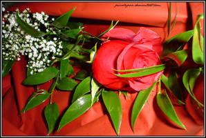 la rosa del perdono... by PiccolaPoce