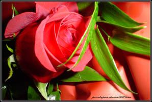 la rosa del perdono...2 by PiccolaPoce