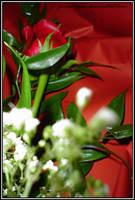 la rosa del perdono...3 by PiccolaPoce