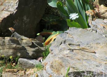 Lizard and Snake by olgakofti