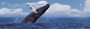 Humpback Whale by Bostonjon86