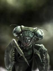 praying mantis by mantisfilm