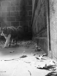 January Cat by natsimply