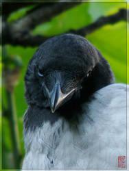 Crows: Blue Eyes II by nihilist1