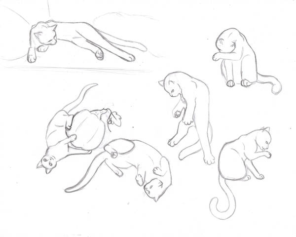 Cat Study Sketches Part 2 By Sapphire Blackrose On Deviantart