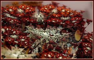 Tim's Spider Web by gannjondal