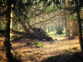 fallen tree by jennomat
