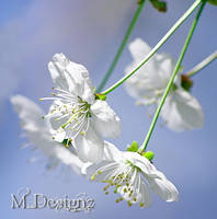 White Is For The Purity Of Spring by 33M