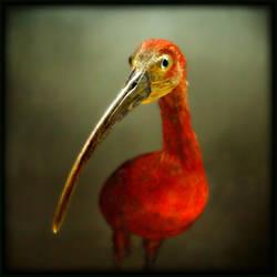 Portrait d'un oiseau rouge by Renoux