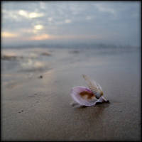 Plage le soir - coquillage by Renoux