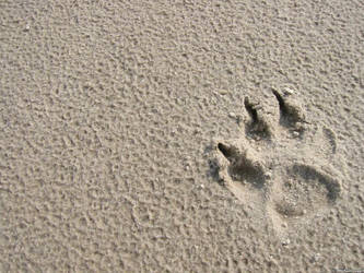 Paw in Sand by jonasbn