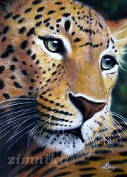 leopard by zimnika7