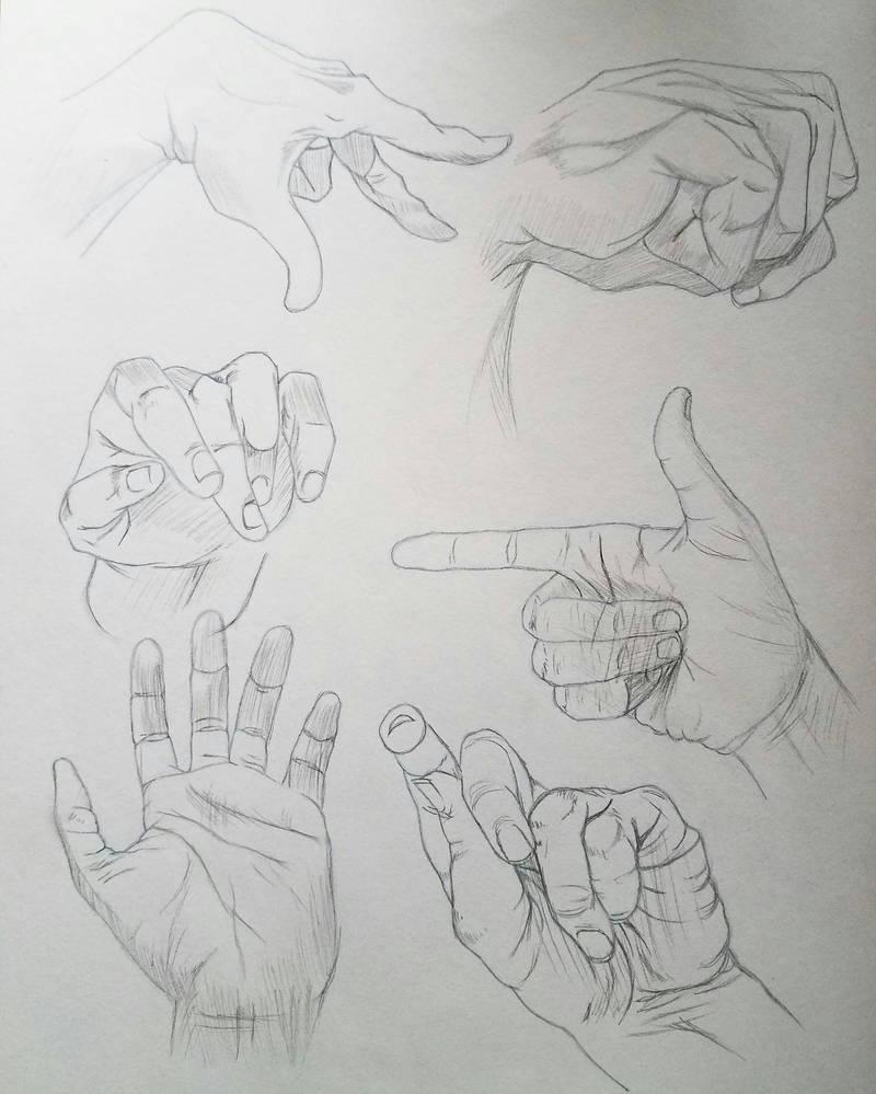 Hand Anatomy By Koalatheartist On Deviantart